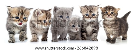 studio isolated over white portrait of large group of kittens against white background - stock photo