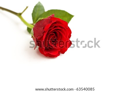 Studio isolated passion concept using a red rose. - stock photo