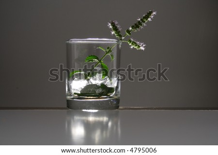 Studio lit glass filled with shiny cubes of ice and mint leaves - stock photo