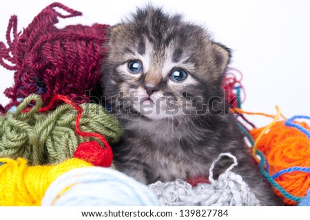 Studio portrait of a cute little kitten in balls of wool