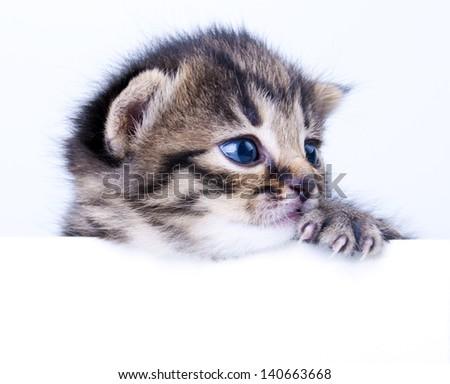 Studio portrait of a cute little 2 weeks old kitten. - stock photo