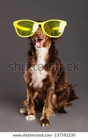 Studio portrait of a mixed breed brown dog wearing over sized funny yellow plastic glasses, and looking at the camera with a large smile on its face. - stock photo