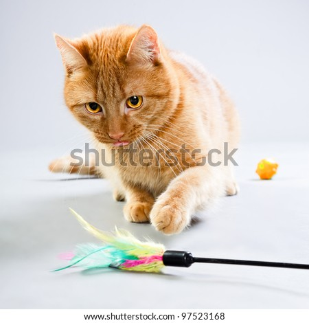 Studio portrait of red cat playing with toys isolated on grey background - stock photo