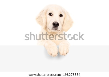 Studio shot of a cute puppy standing behind blank panel isolated on white background - stock photo