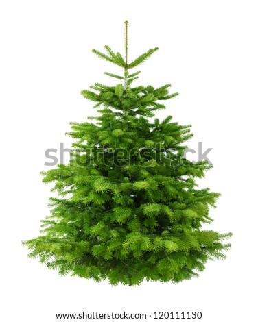 Studio shot of a fresh gorgeous Christmas tree without ornaments, isolated on white - stock photo