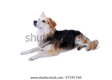 studio shot of a mixed breed dog