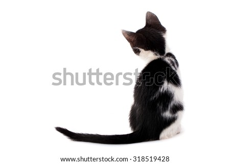 Studio shot of adorable young black and white kitten from back - stock photo
