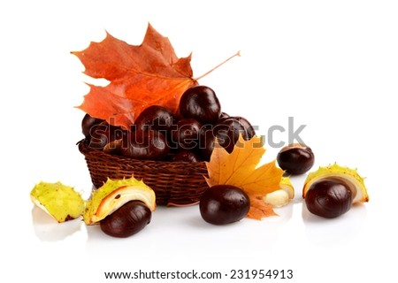 Studio shot of few chestnuts without shell with autumn red leaves isolated on white background