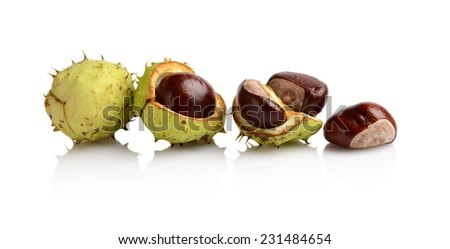 Studio shot of four chestnuts arranged in line isolated on white background