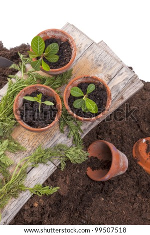 studio-shot of planting seedlings in terracotta flower pots, isolated on a white background - stock photo