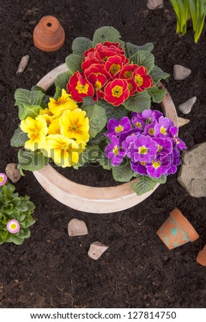 Studio shot of primroses in a terracotta flower pot, bellis perennis (daisy flowers), hyacinth flowers and pottery in flowerbed