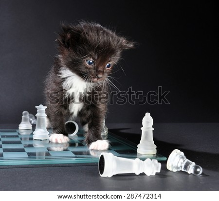 Studio shot of small black kitten sitting on glass chess board with scattered pieces. Isolated on black background. - stock photo