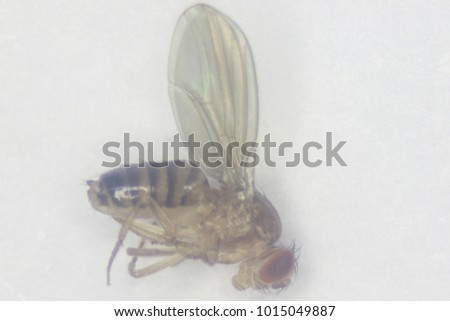 from Sterling gay fruit flies