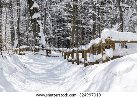 Stuinnig snowy winter in mountains forest, Bieszczady - stock photo