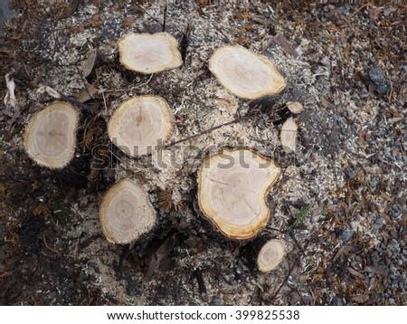 stump 2 - stock photo