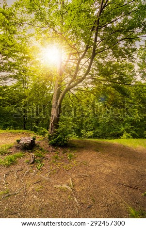 stump among the grass on logging place near forest in summer - stock photo
