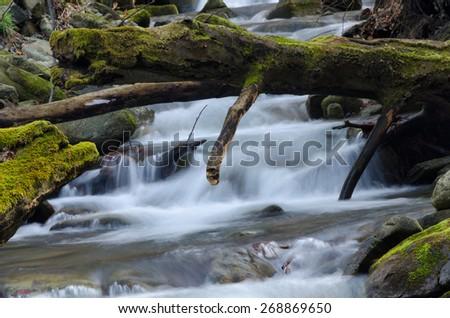 Stump and waterfall - stock photo