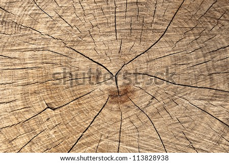 Stump as natural background texture - stock photo