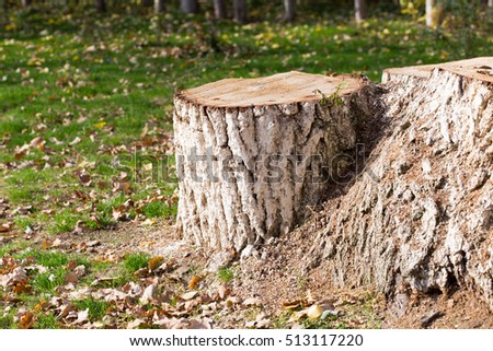 Stump, background, grass in autumn