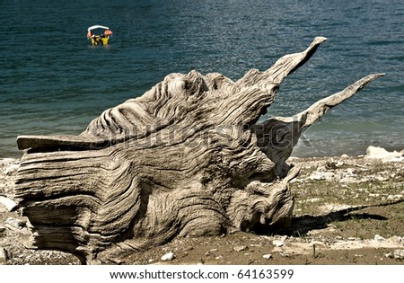 stump by the lake - stock photo