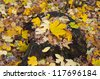 stump in the forest with autumn leaves - stock photo