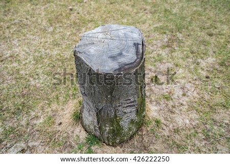 stump of the park - stock photo