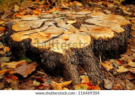 Stump of the tree - stock photo