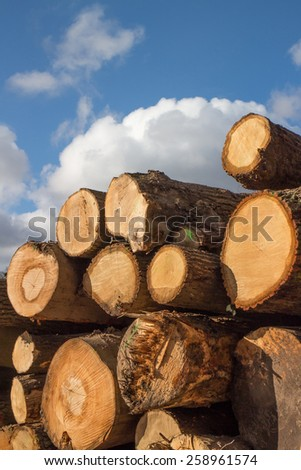 Stump stack, cut tree trunks - stock photo