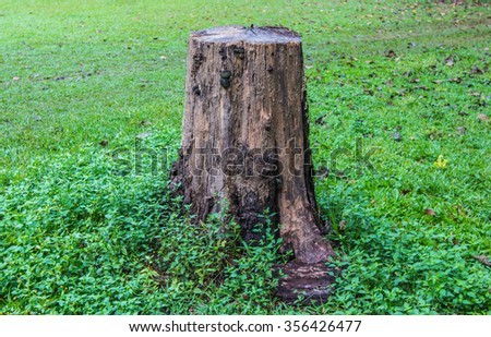 stump texture,stump pattern
