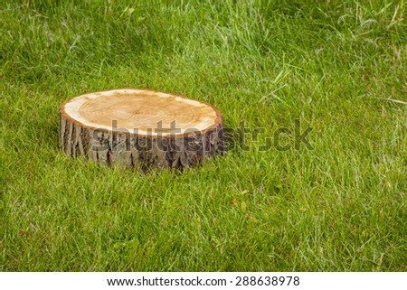 Stump tree plant on green grass field - stock photo