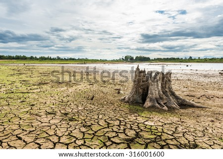 Stump with cracked mud in the bottom of a river showing drought - stock photo