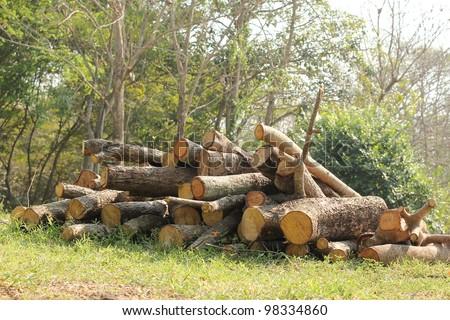 Stumps - stock photo