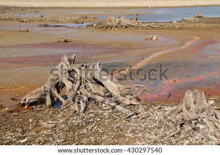 stumps of dead trees with revealed roots on the bottom of drying pond with strange colorful soil - stock photo
