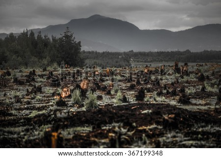 Stumps on the valley caused by deforestation and slash and burn type of agriculture of Madagascar - stock photo