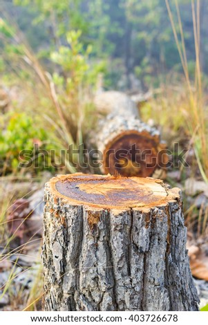 Stumps on the valley caused by deforestation and slash and burn type of agriculture of Thailand