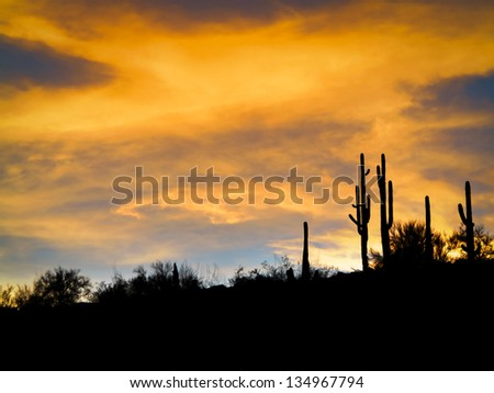 Stunning Arizona sunset with the black outlines of multiple cacti and cactus - stock photo