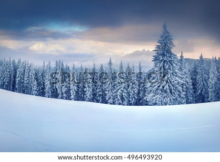 Stunning Christmas scene in the mountains. Colorful winter morning in the foggy morning. Carpathian national park, Ukraine, Europe. Artistic style post processed photo.