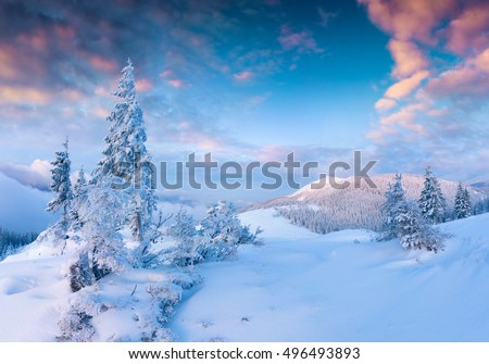 Stunning Christmas scene in the mountains. Colorful winter sunrise in the foggy morning. Carpathian national park, Ukraine, Europe. Artistic style post processed photo.