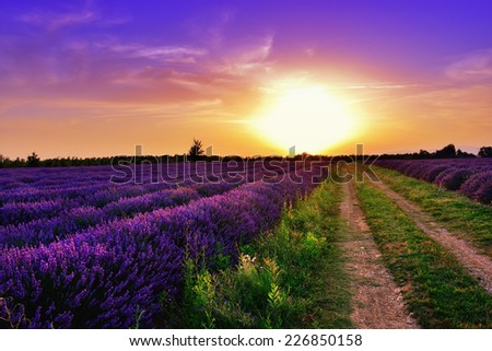 Stunning landscape with lavender field and dirt road at sunset. Plateau of Valensole, Provence, France - stock photo