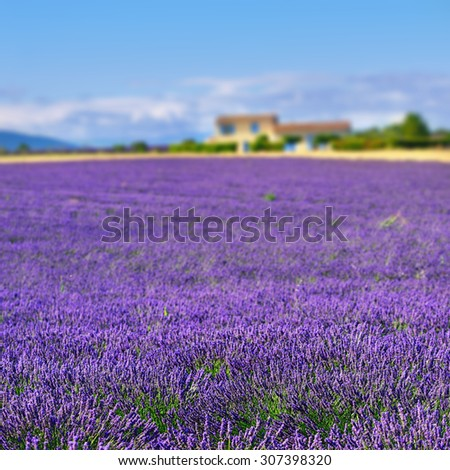 Stunning landscape with lavender field and farmhouse on background. Plateau of Valensole, Provence, France. Focus on the foreground (lavender field) - stock photo