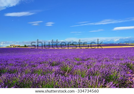 Stunning landscape with lavender field and farmhouse on background. Warm evening light.  Plateau of Valensole, Provence, France. - stock photo