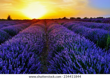Stunning landscape with lavender field at sunset. Plateau of Valensole, Provence, France - stock photo