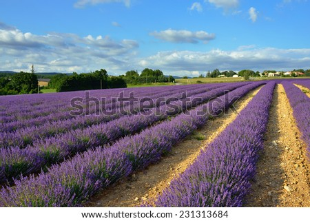 Stunning landscape with lavender field  at sunset.  Provence, France - stock photo