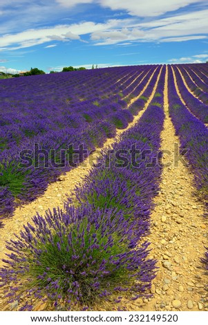 Stunning landscape with lavender field. Plateau of Valensole, Provence, France - stock photo