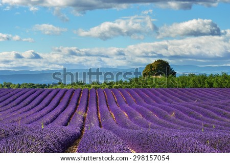 Stunning landscape with lavender field under warm evening light. Plateau de Valensole, Provence, France