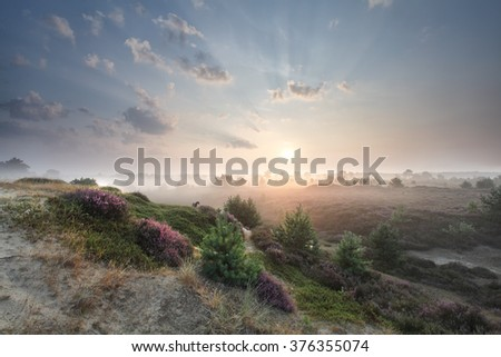 stunning misty sunrise over hills with heather flowers and mini schnauzer - stock photo