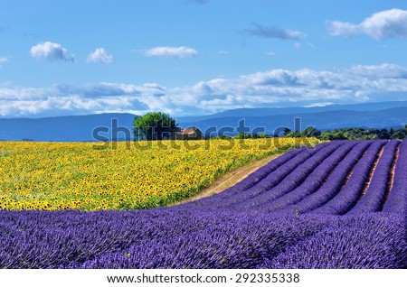 Stunning rural landscape with lavender field, sunflower field and old farmhouse on background. Plateau of Valensole, Provence, France - stock photo