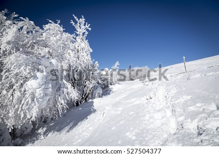 Stunning snowy winter in mountains forest, Bieszczady