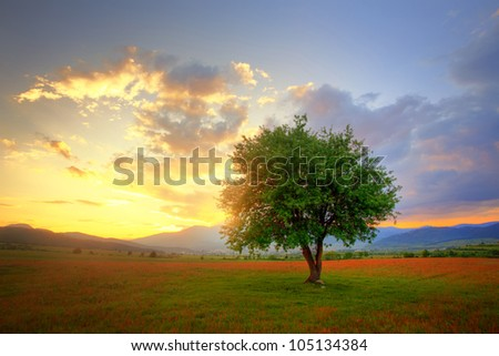 stunning sunset in HDR technique over the red and green summer field - stock photo