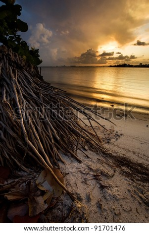 Stunning tropical sunset and palm tree roots - stock photo